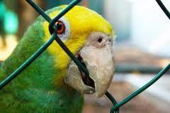 birds-hand-bread