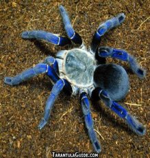 spider--spiderlings